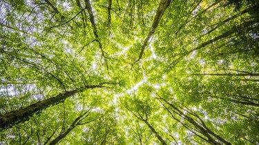 Co po ochronie środowiska?